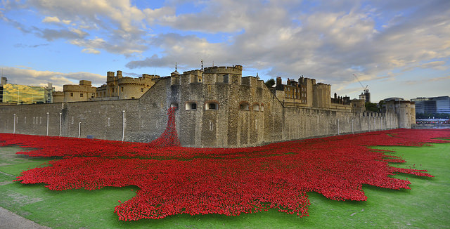 Poppies at the Tower of London, image by Martin Pettitt.